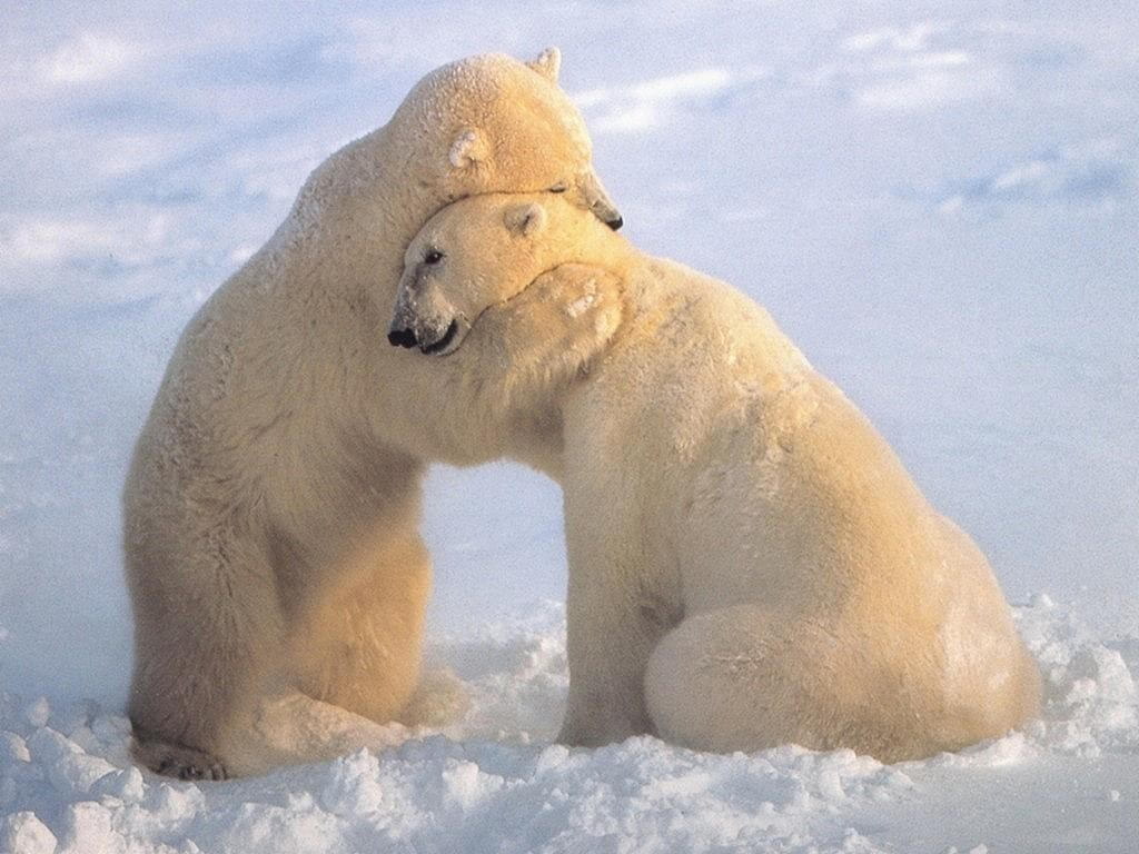 Cute animal hugging